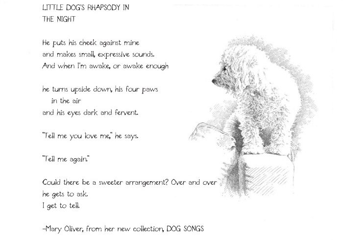 Mary Oliver Lil Dog Dog Poems Mary Oliver Poems Mary Oliver