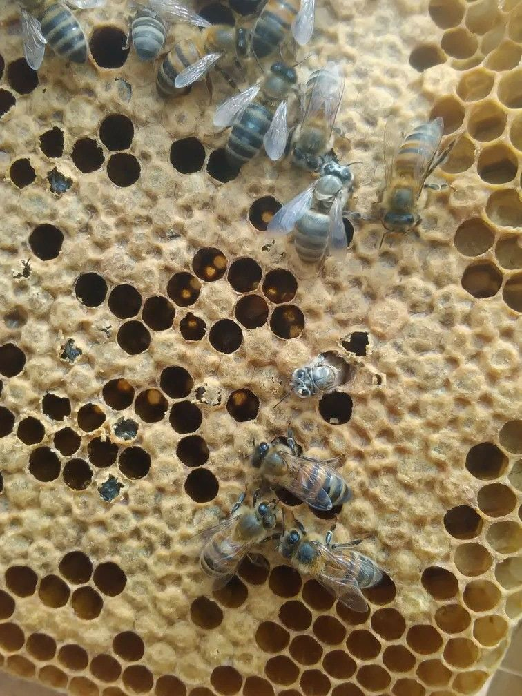 El nacimiento de las abejas   Abejas-Bees/Apicultura-Beekeeping/Miel ...