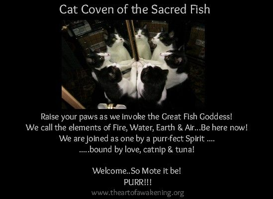 the cat coven of the sacred fish