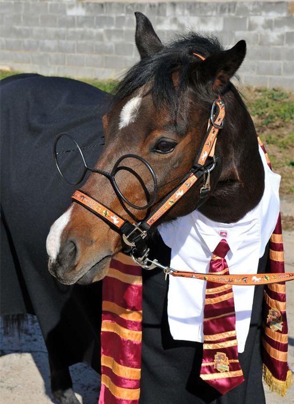 время наряды для лошадей в картинках для обеспечения войск