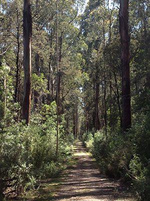 Big Forest Run