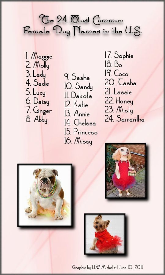 Cute Female Puppy Names For Small Dogs Cute Female Puppy Names