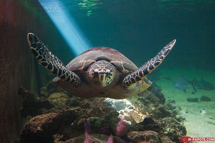 aquarium-ile-maurice-tortue