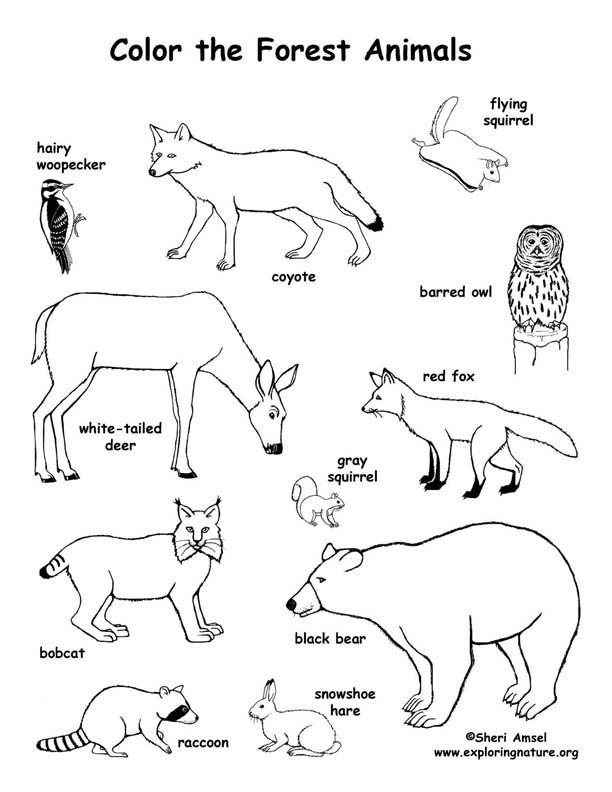 First Paper Forest Animals Coloring Pages - Seapeaker ...