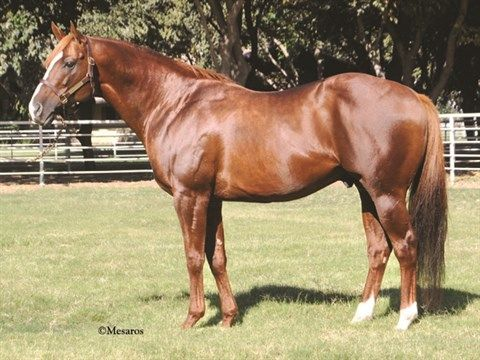 Lucky Pulpit - Stallion Register Online
