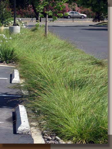 Parking Lot Stormwater Swales Drains Drainage Water Management