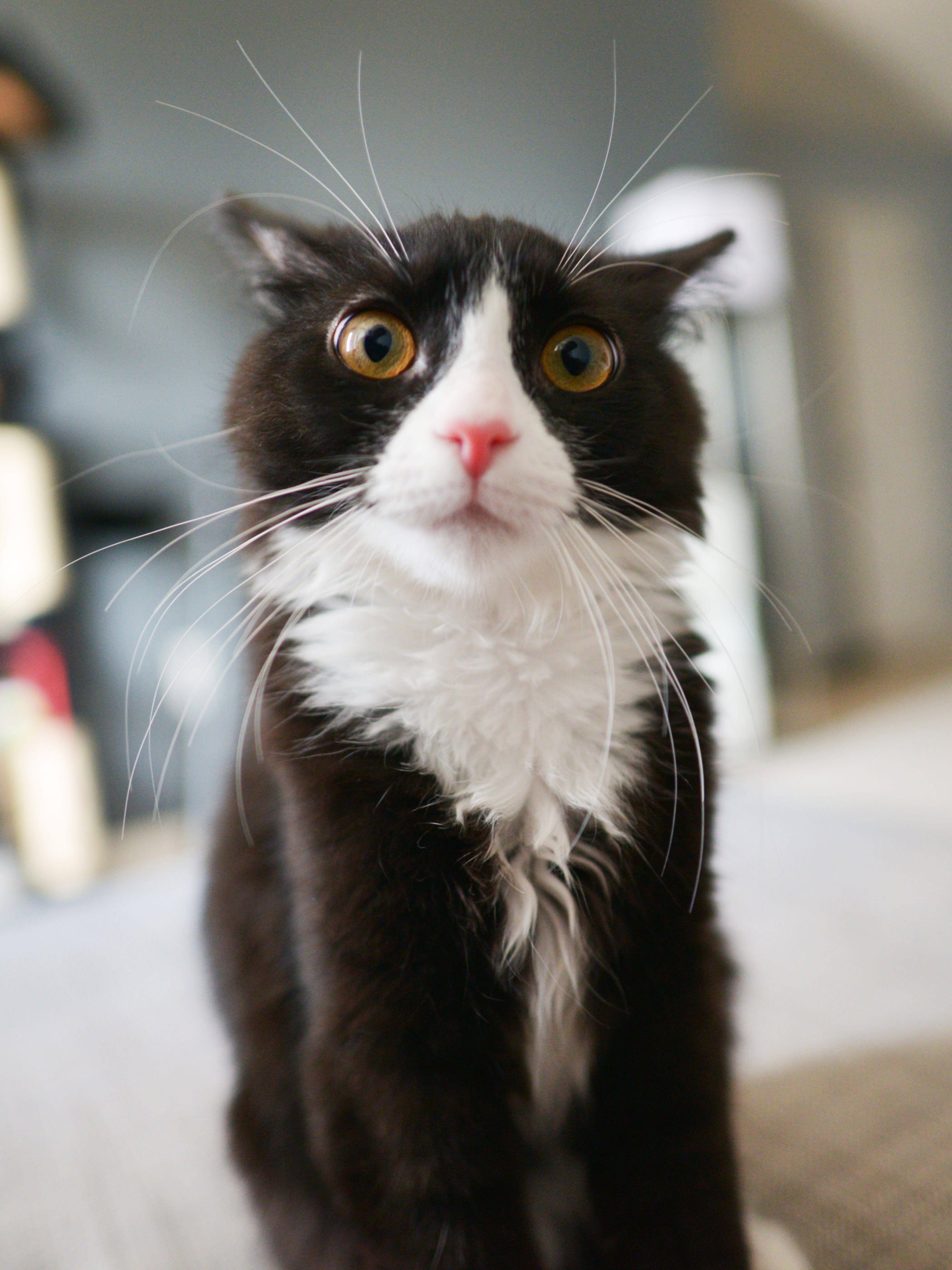 смешной, прикольный, перепуганный кот | Самые милые ...