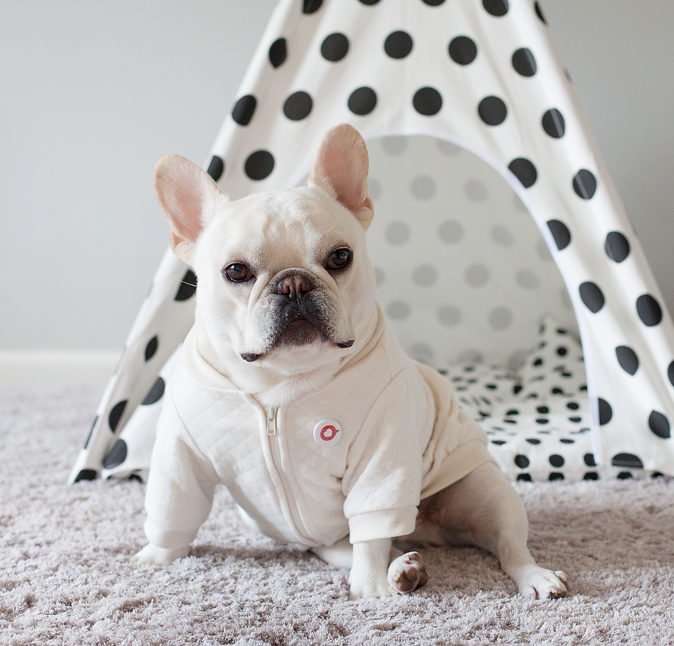 theo the french bulldog is guarding his new crib teepee by pipolli french bulldogs. Black Bedroom Furniture Sets. Home Design Ideas