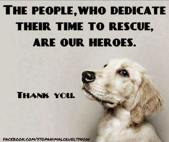 Thank You Animals Dog Love Rescue