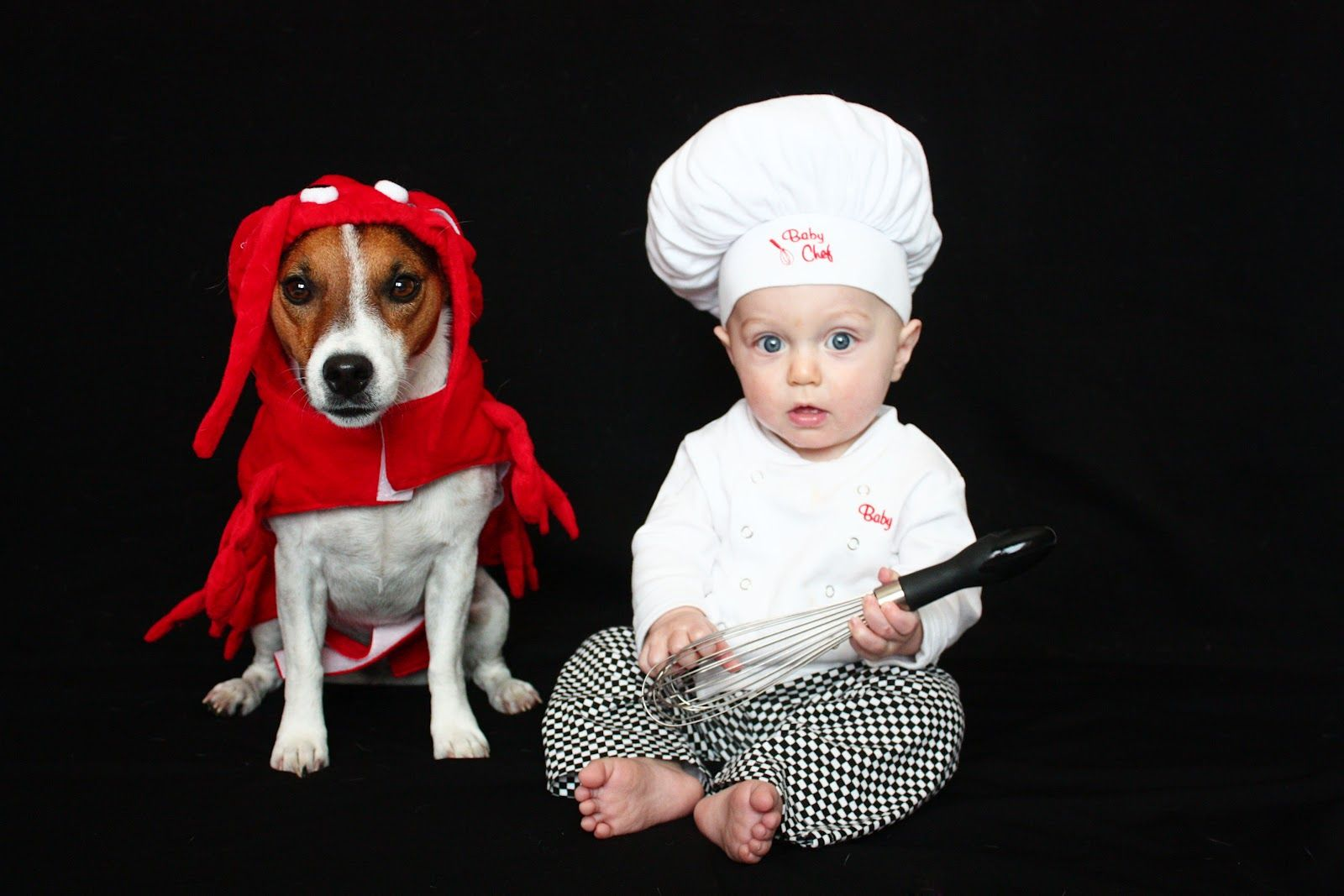 baby chef and lobster dog Halloween Costume | Halloween ...