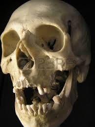 skull photography - Αναζήτηση Google
