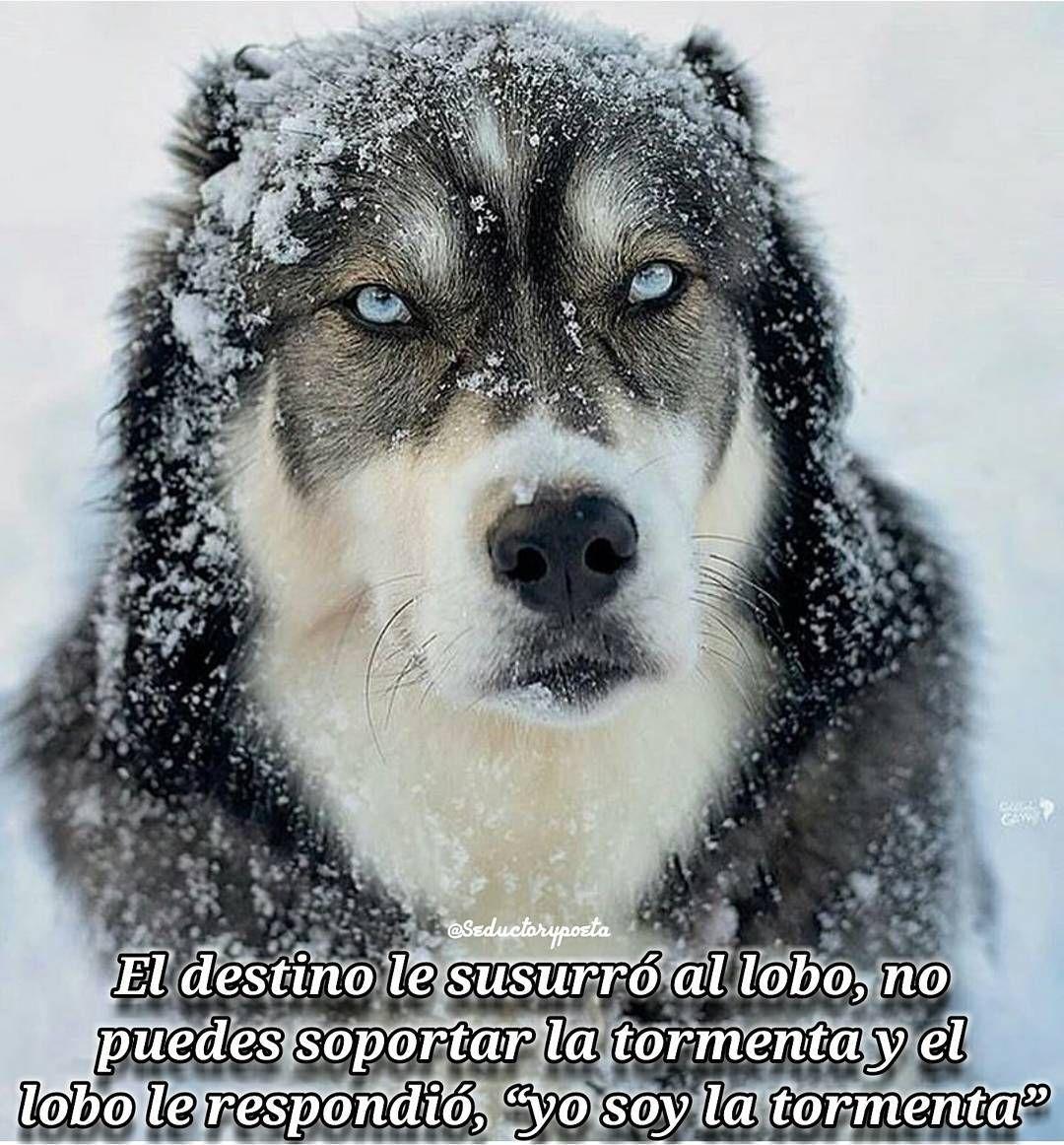 Yo soy la tormenta no le temo a nada ni a nadie mi