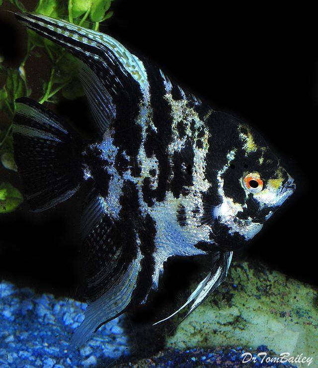 Pin On Aquarium Fish Aquariums