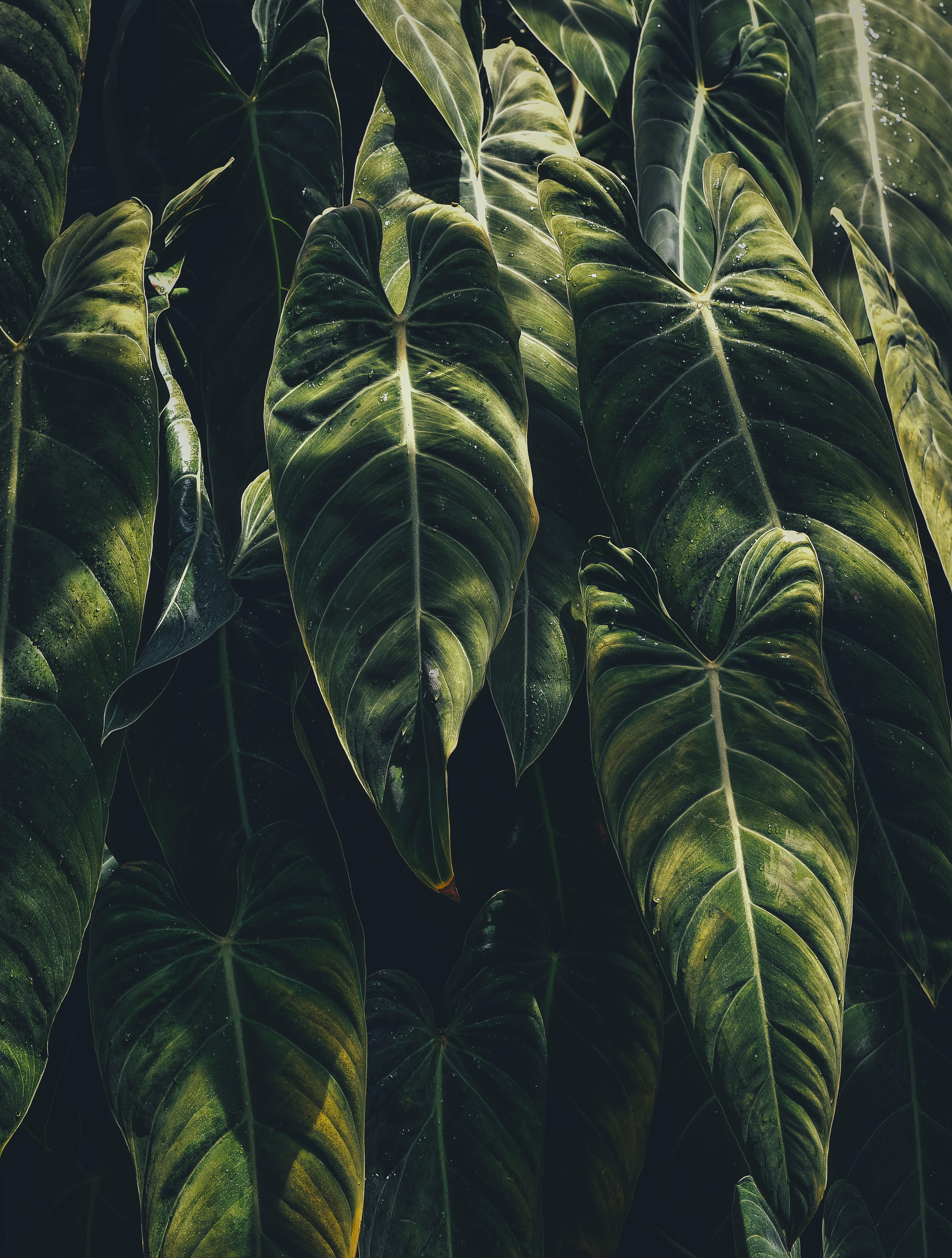 Leafe, plant, leaf and greenery HD photo by Annie Spratt