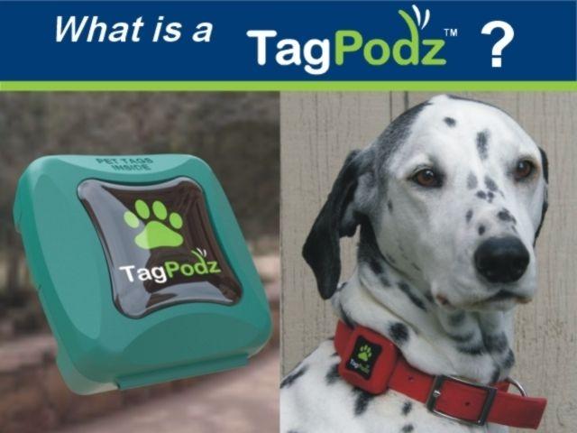Dog Leash Holder Dog Collar Dog Tag Personalized Dog By Kaysdekor