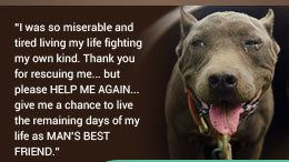Get Pit Bull Breeds off of the aggressive breed list! It's the owner, not the dog!