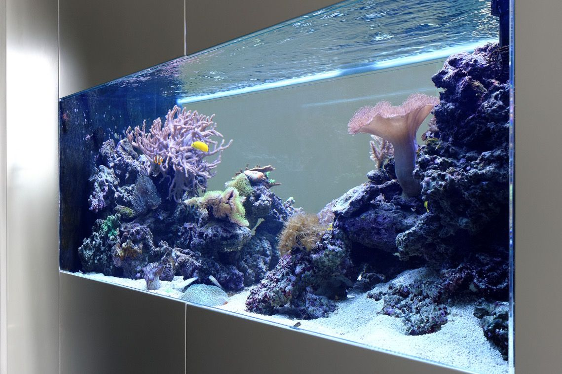 raumteiler b ro aquarium pinterest. Black Bedroom Furniture Sets. Home Design Ideas