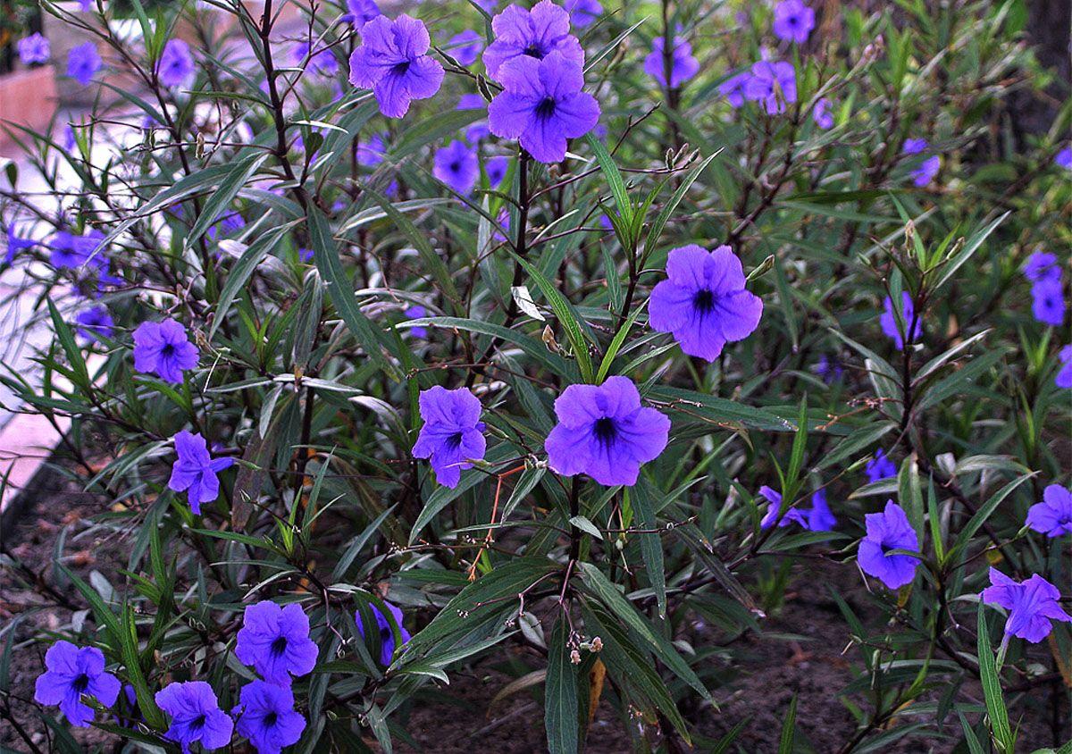 Igual A La De Mi Jardin Con Imagenes Semillas De Flores