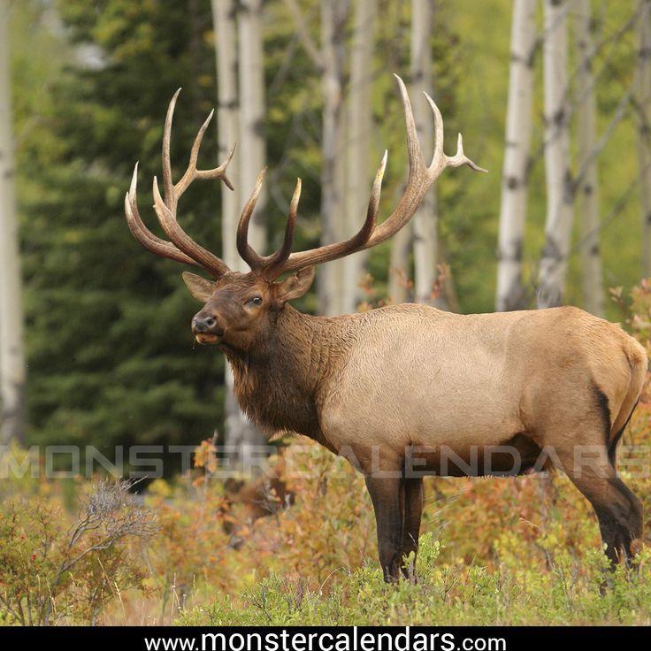 Best Whitetail Calendar, Best Hunting Mule Deer Elk