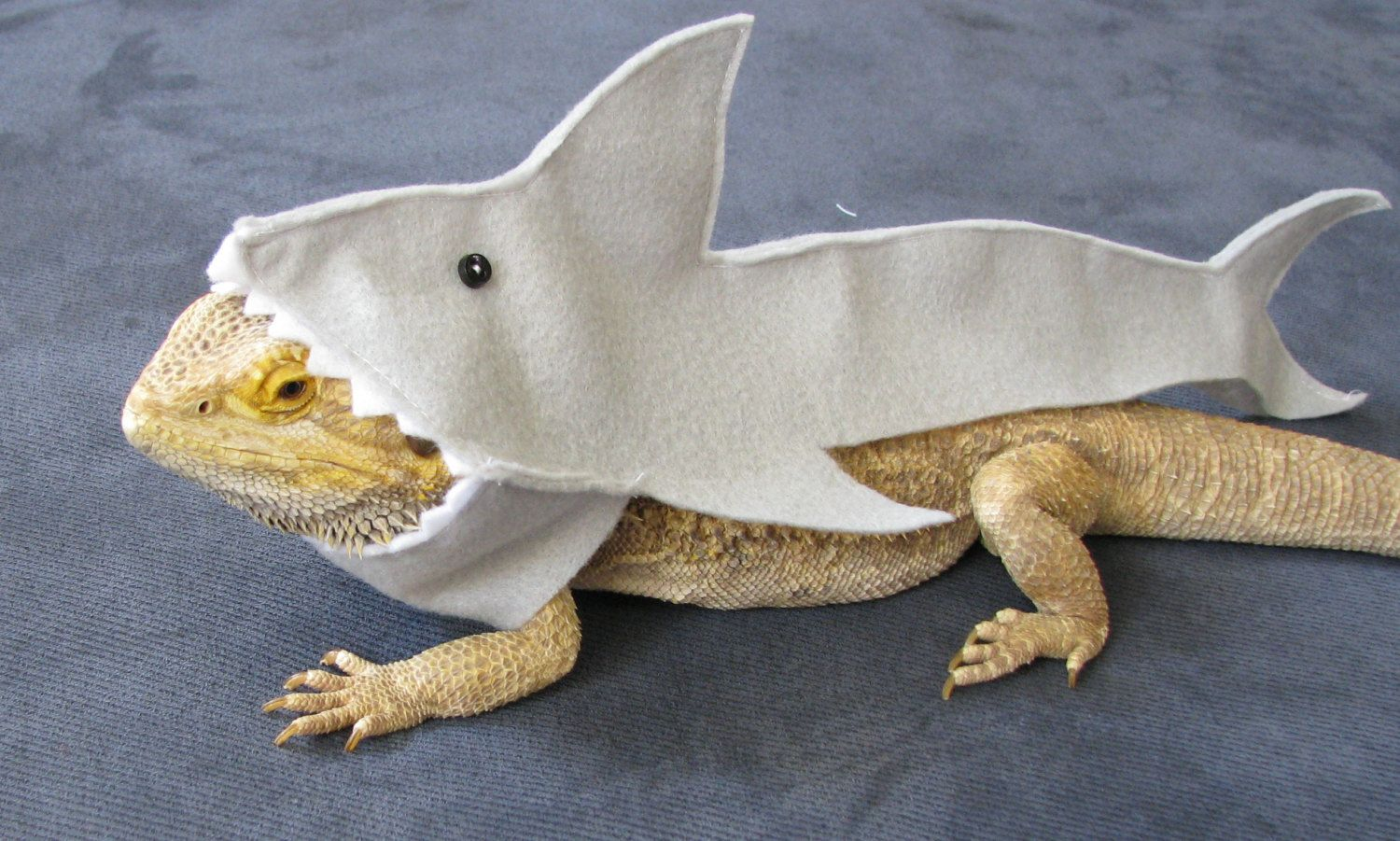 ea5cb1abcfd Shown on Discovery s Shark Week!!! Handmade Felt Bearded Dragon Great White  Shark Costume with FREE Bow! (10.00 USD) by PamperedBeardies