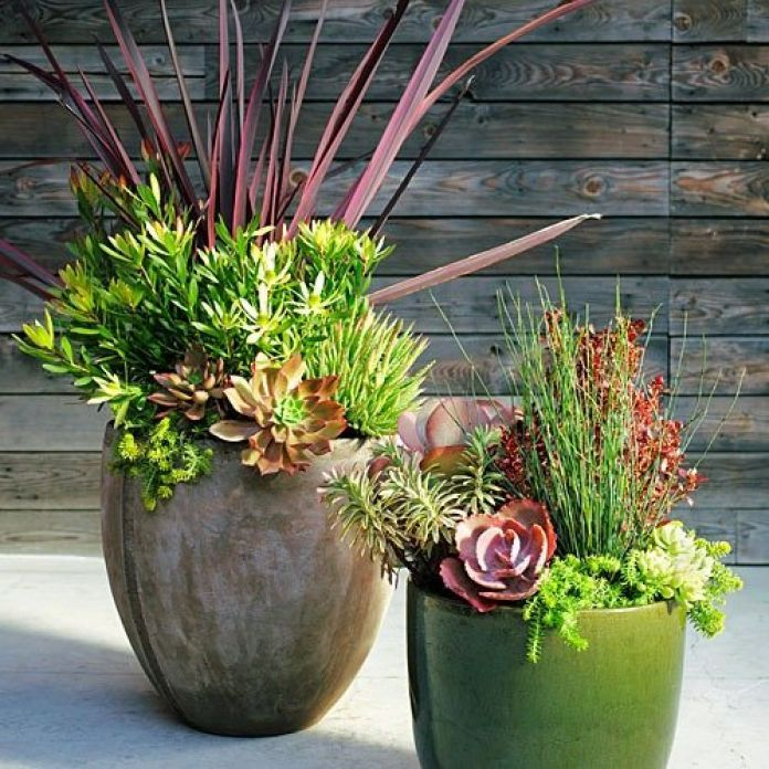 Succulent mini landscape Plum-colored foliage is a rich accent against soft greens in these easy-care containers. Arrange taller plants in the center or back, trailers near the pot's edges. For immediate effect, choose large plants and big pots (shown above left: 10 in. across, 14 in. tall; right: 16 by 18 in.). Start smaller for a less pricey combination. Design: Daniel Nolan, Flora Grubb Gardens (floragrubb.com)  Grow them: Pick pots with ample drain holes and use fast-draining potting…