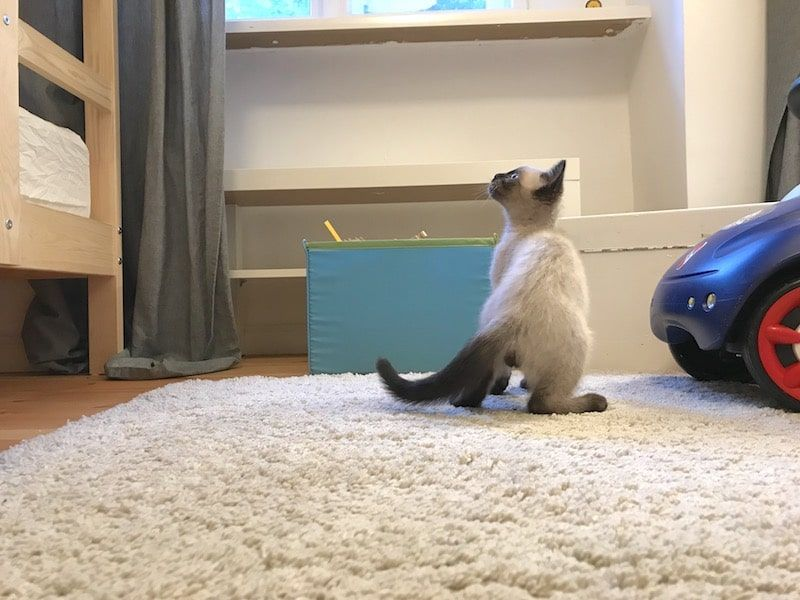 Katze Drei Kinder Tipps Kosten Ausstattung Baby Katzen Katzen Kinder Tiere