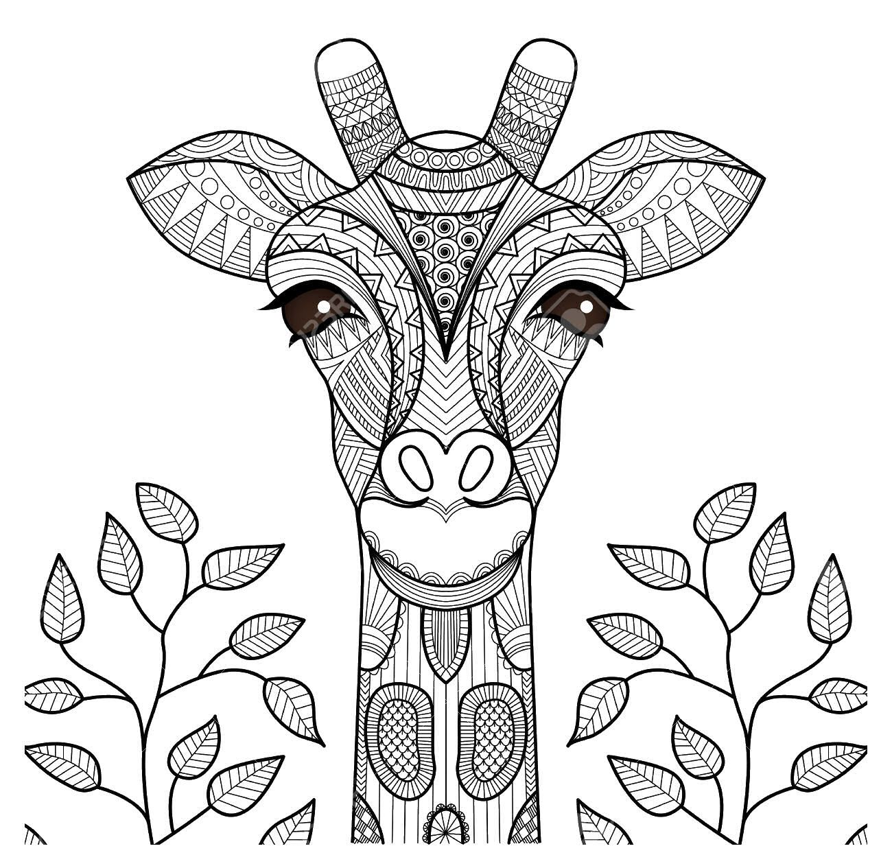 Adult Coloring Pages Giraffe Adult Coloring Pages And Zentangled