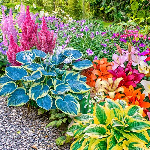 Shade Perennials: Shade Garden Kit (hostas, Astilbe U0026 More)