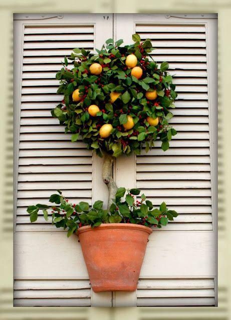 Cute Topiary Idea