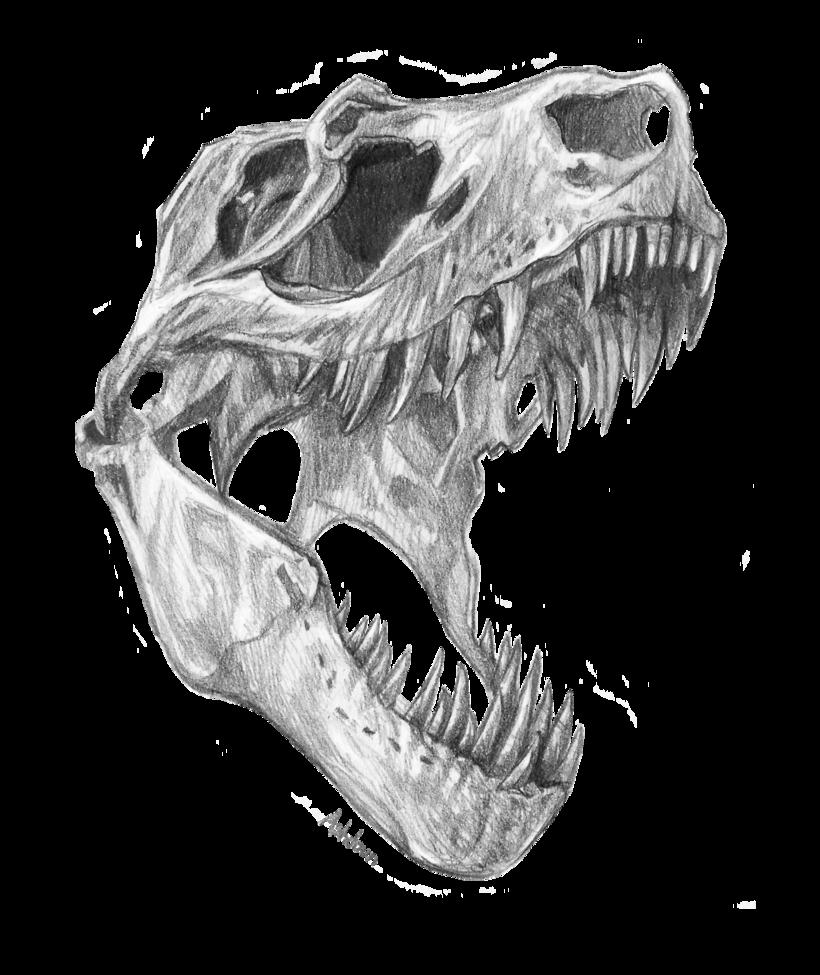 T Rex Skull By E Pona Deviantart Com On Deviantart Dinosaur Art Skeleton Drawings Skull