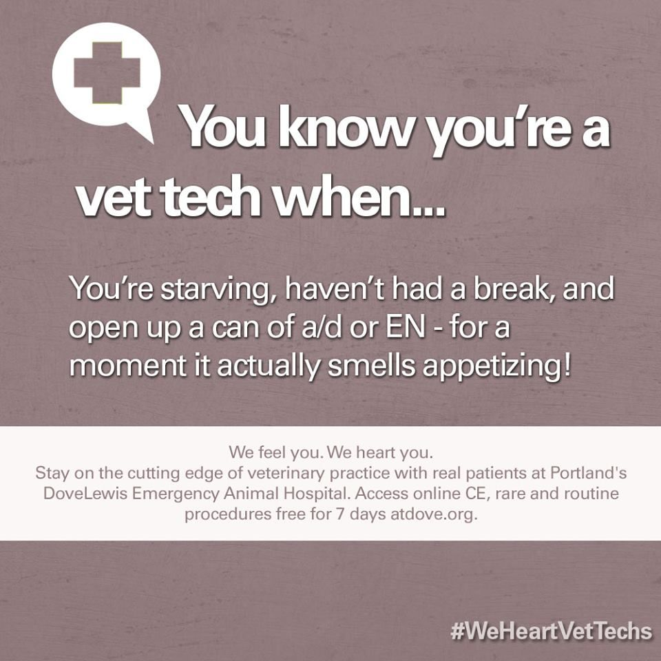 Just About Every Vet Tech Can Relate To This Vet Tech Vet Tech