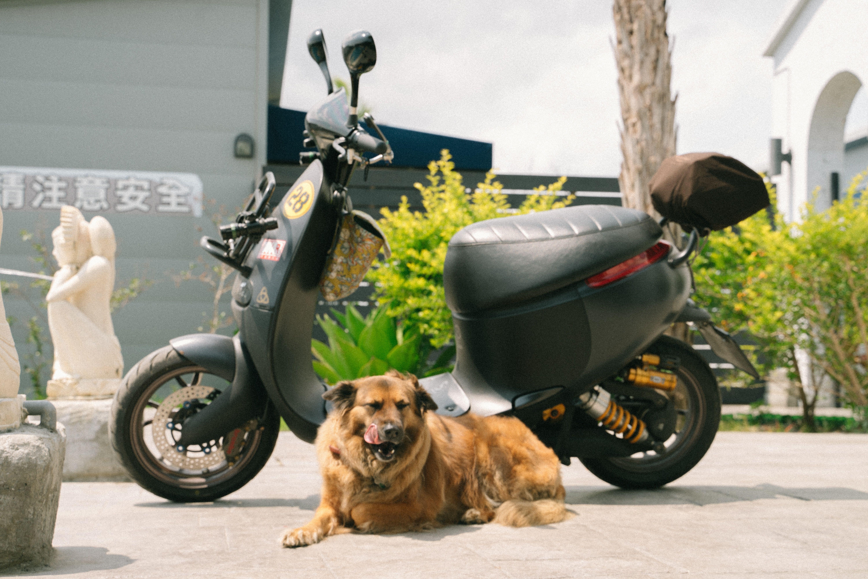 Insure my scooter az 5209175295 dog photograph dog
