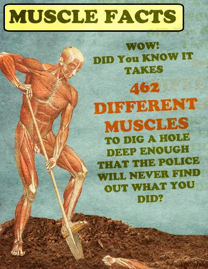 Muscle Facts: It takes 462 different muscles to dig a hole deep