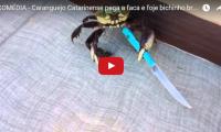 Crab brandishes knife