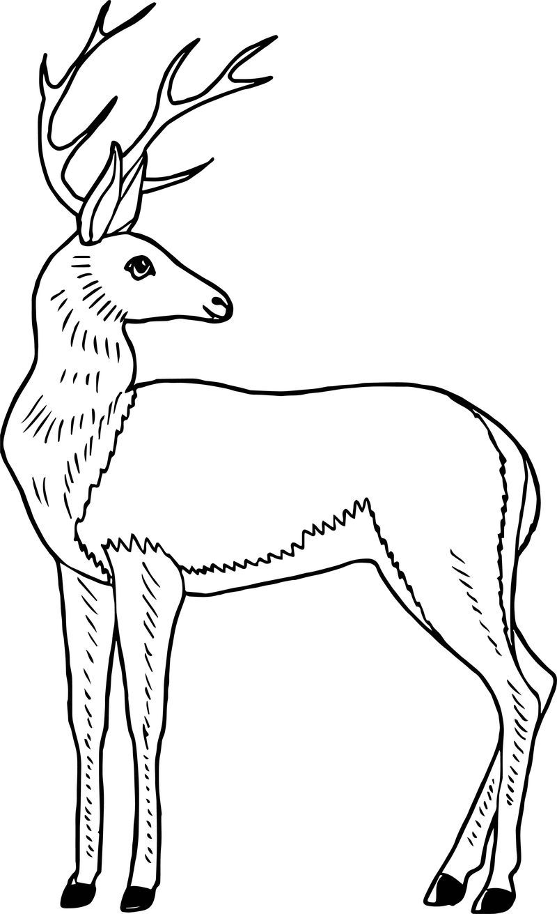 Antelope Deer Coloring Page See The Category To Find More