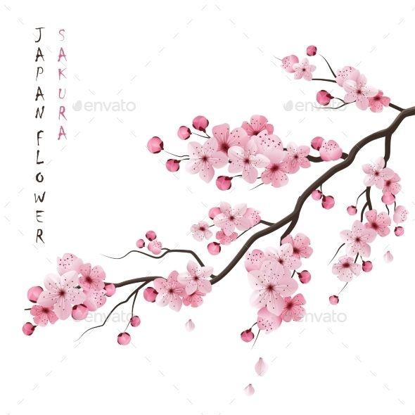 Realistic Sakura Branch Cherry Blossom Drawing Cherry Blossom Art Cherry Blossom Clip Art