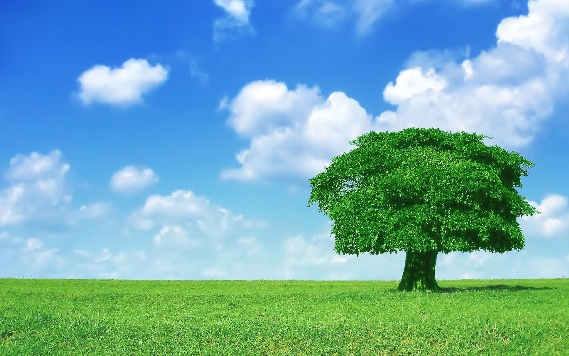 Windows Xp Background Image Tree Hd Wallpaper Green Trees Tree Wallpaper