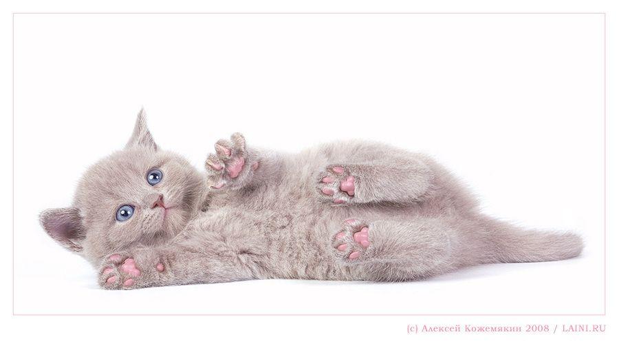 Pink feet | lie, cub, cat