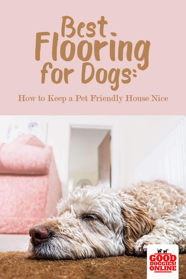 What is the Best Flooring for Dogs Training your dog