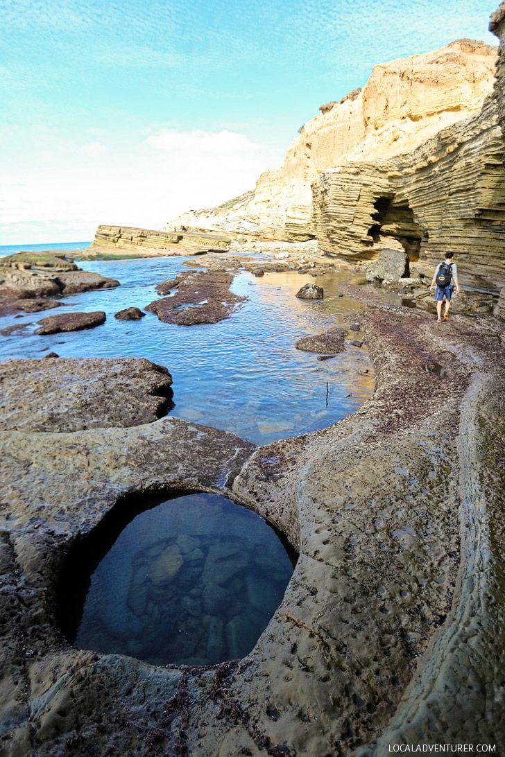 Amazing sea life at cabrillo national monument tide pools tide amazing sea life at cabrillo national monument tide pools nvjuhfo Gallery