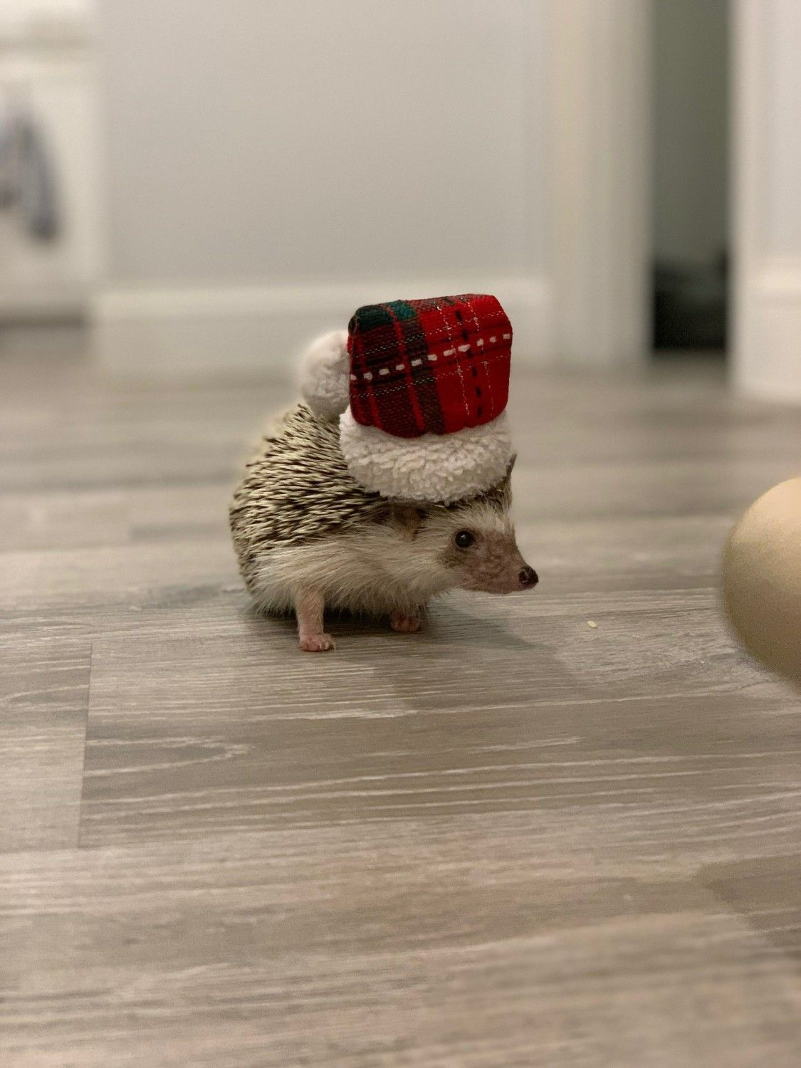 christmas hamster costume in 2020 (With images) Cute