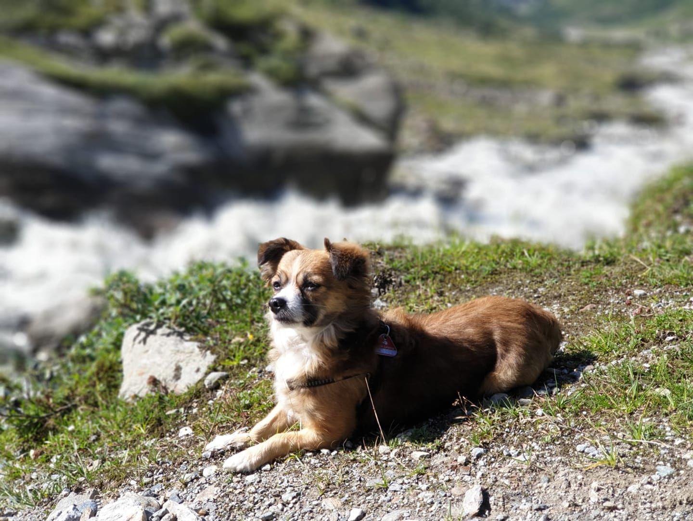 Wandern In Osterreich In Pitztal Am Gletscher Die Pause Hatte Er Sich Verdient Hundewandern Wandern Wa Wandern Osterreich Urlaub Mit Hund Wattwanderung