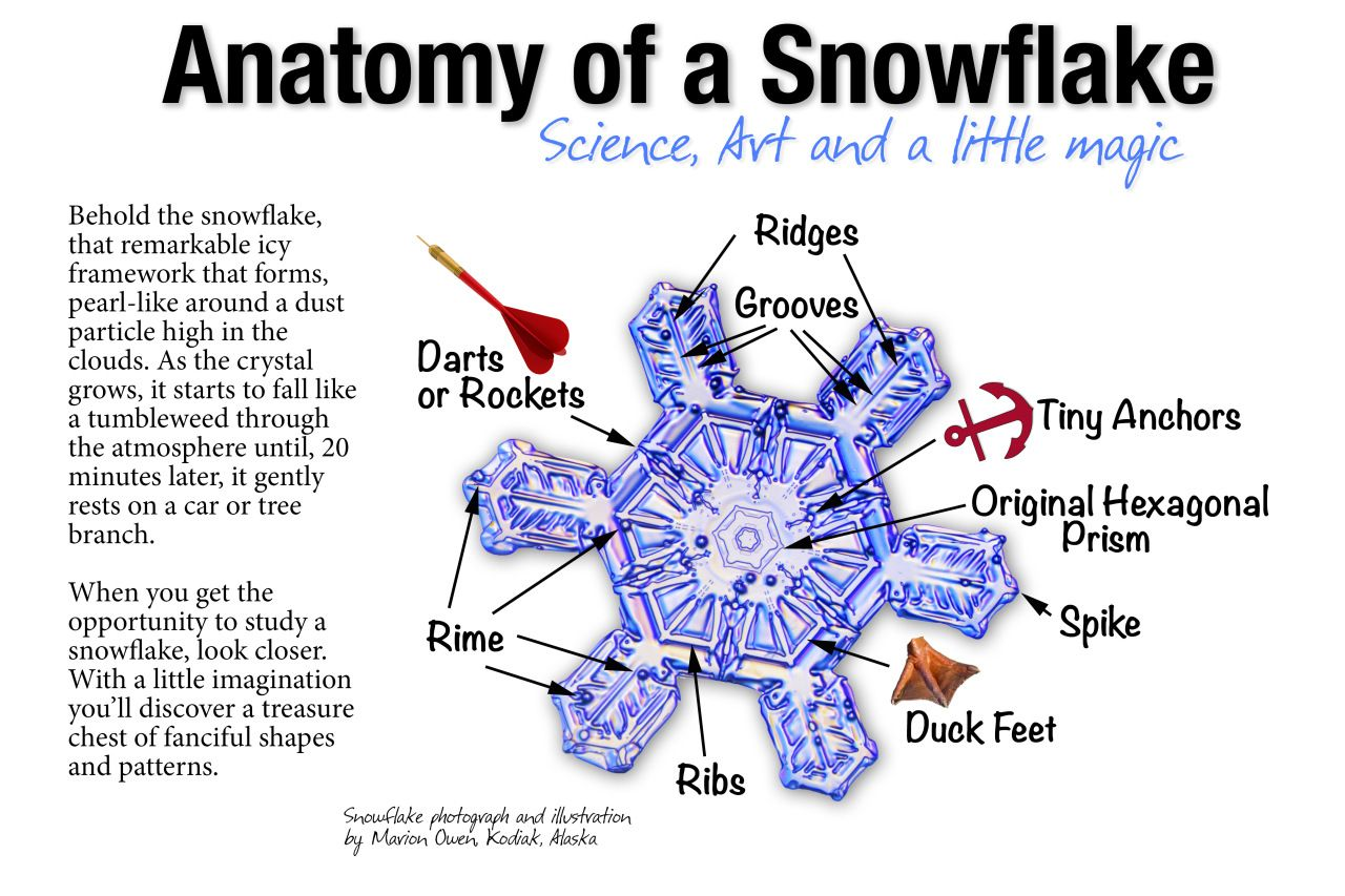 Anatomy Of A Snowflake Science Art And A Little Magic Pinterest