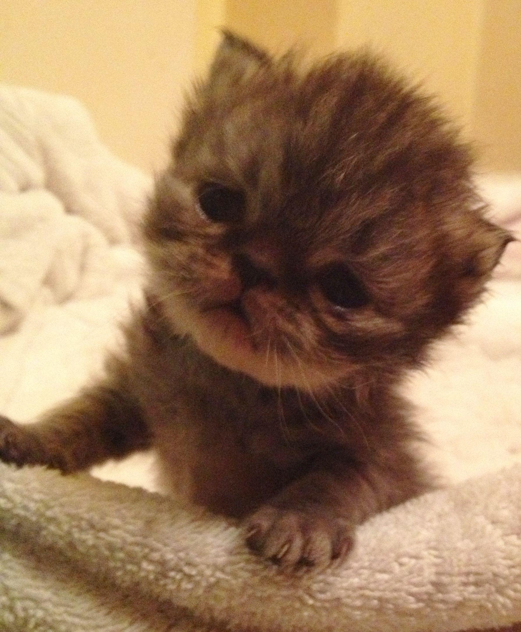 So Cute Baby Kitten Cute Baby Animals Baby Kittens Kittens Cutest
