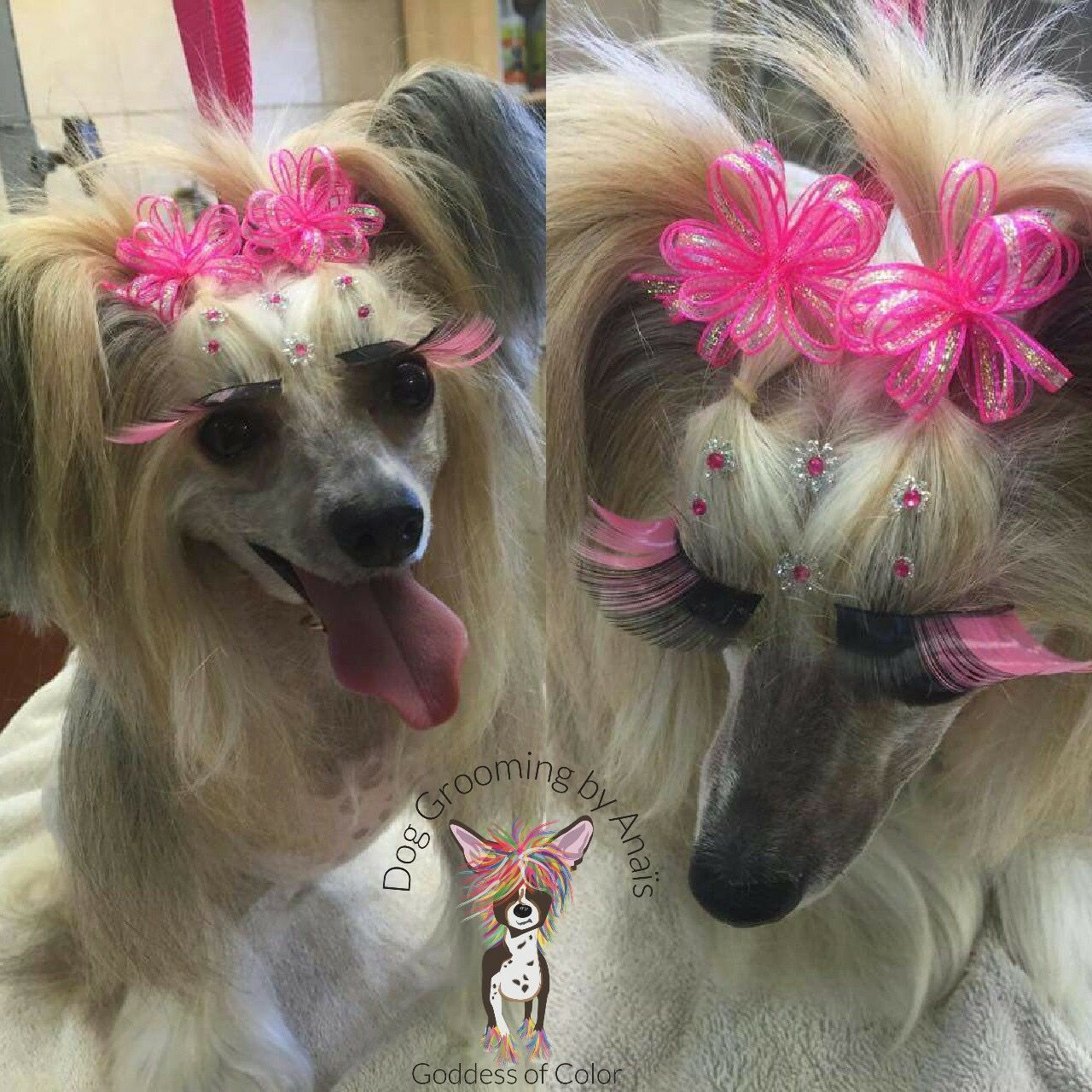Pin by Anaïs Hayden on Dog Grooming By Anais Grooming