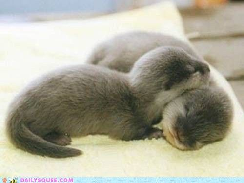 Otters are our family mascot cause how can you ever look at an otter & be sad.