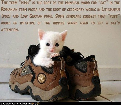 100 Fun Cat Facts น าร ก