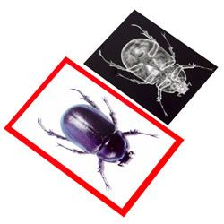 Roylco Insect X-Rays and Picture Cards Set