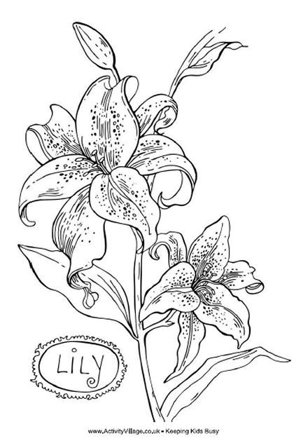 day+lily+clip+art | Lily Flower Coloring Pages Lily Coloring Page ...