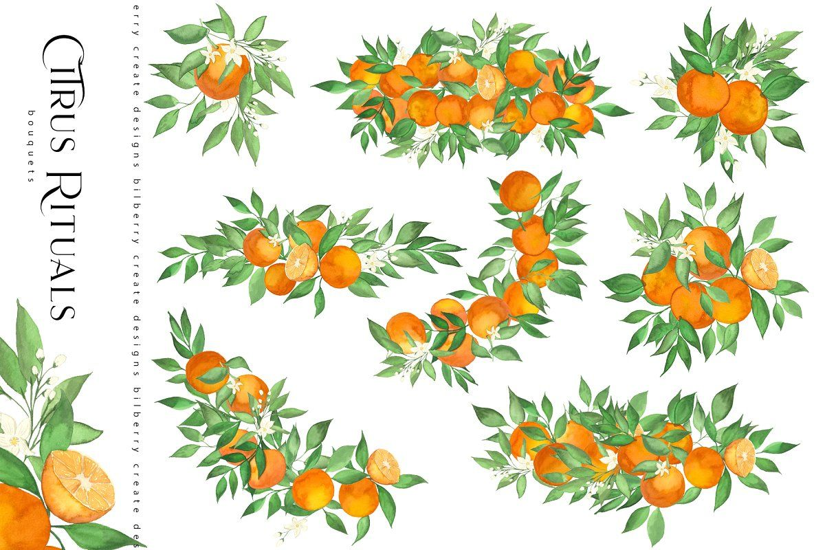 Photo of Citrus Rituals  Custom-Designed Illustrations